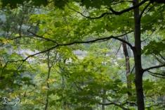 Meditation Trail Overlook