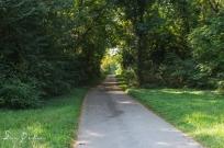 Riney B Trail