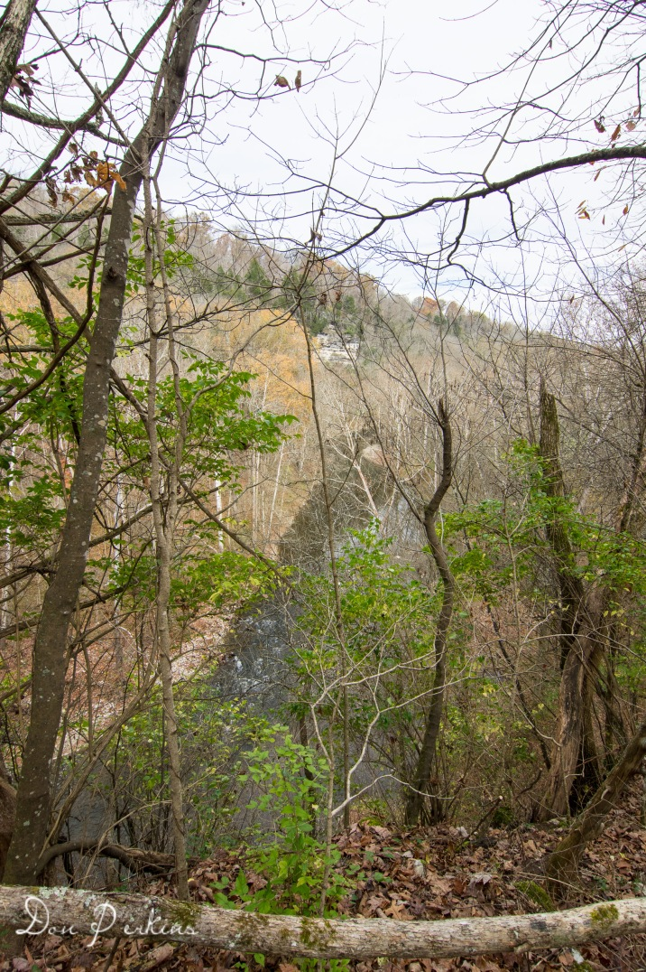 Hickman Creek from Woodland Trail