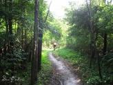 MTB trail