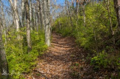 Old Stage Road Trail