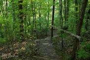 Overlook Path