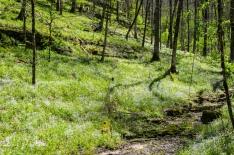 Chinn-Poe Trail