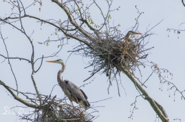 Small heron rookery