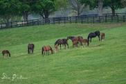 Ramsey Farm along the Harrodsburg Rd Multipurpose Path